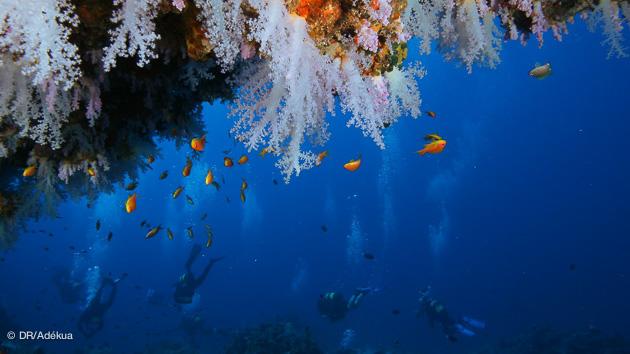 croisières plonger aux Maldives près de Mahé