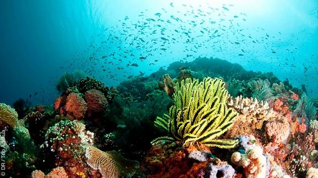 séjour plongée en Indonésie