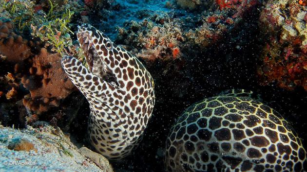 mes meilleures plongée aux Maldives