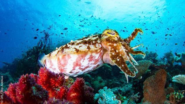 Séjour plongée et croisière en Papouasie Nouvelle Guinée