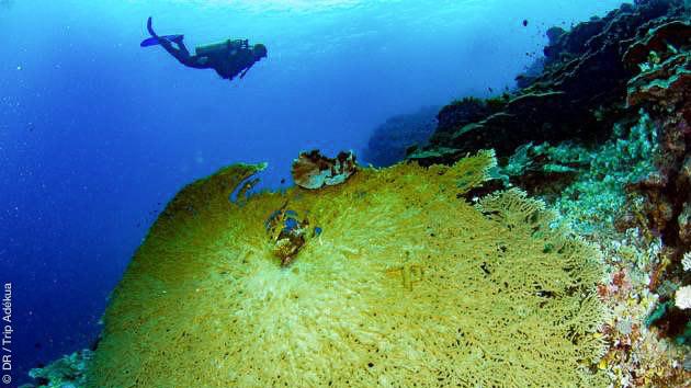séjour plongée Papouasie Nouvelle Guinée