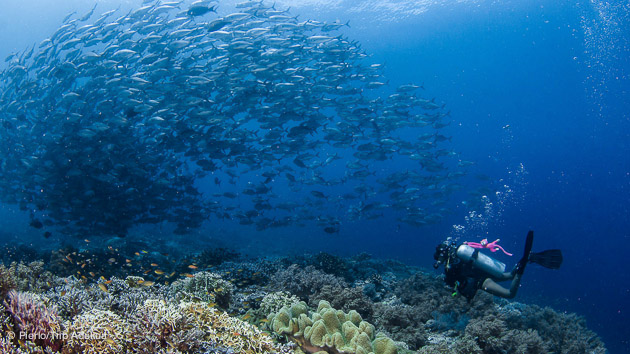 Séjour plongée à Visayas aux Philippines