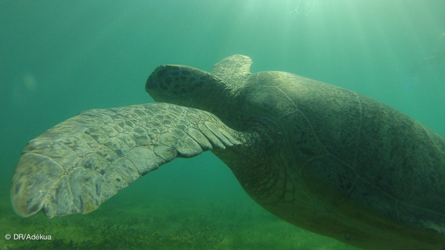 séjour plongée à Madagascar
