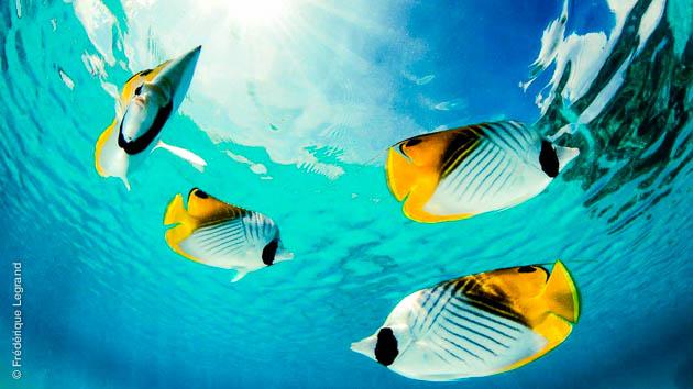 les plus belles plongées pendant mon voyage à Tahiti