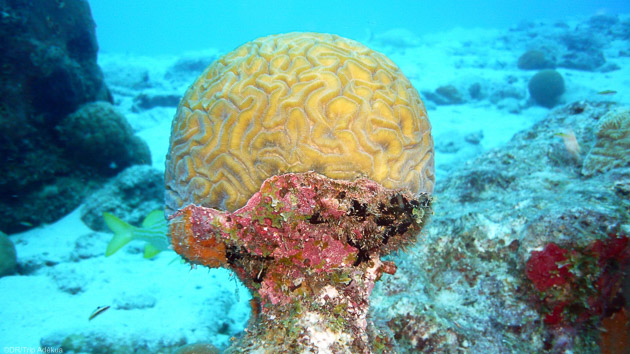 Séjour plongée à Bonaire dans les Antilles néerlandaises