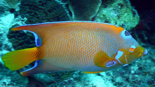 Séjours plongée à Bonaire pour bien commencer l'année 2021