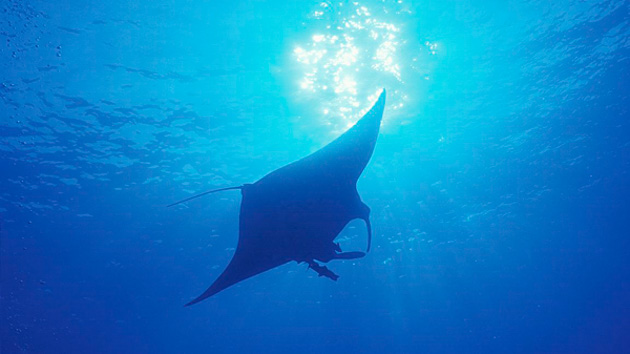 Séjour plongée en mer Rouge en Egypte