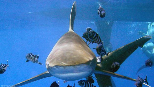 Séjour plongée en Egypte pour découvir les fonds marins de la mer Rouge