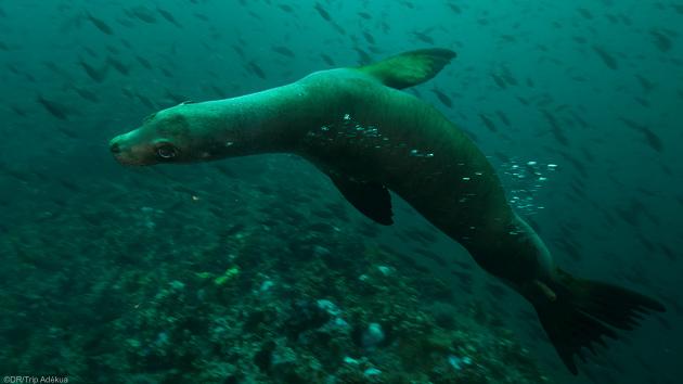 Séjour plongée aux Galapagos en Equateur
