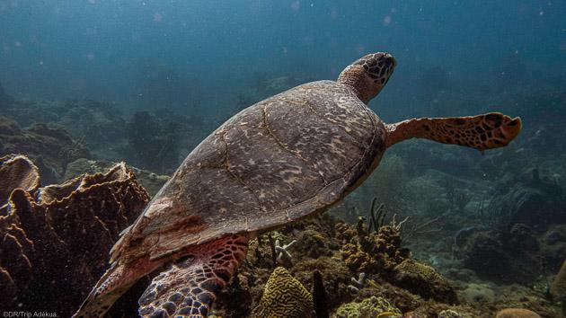 Votre séjour plongée à la découverte de la Guadeloupe