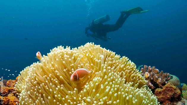 Séjour plongée de Bali à Nusa Penida