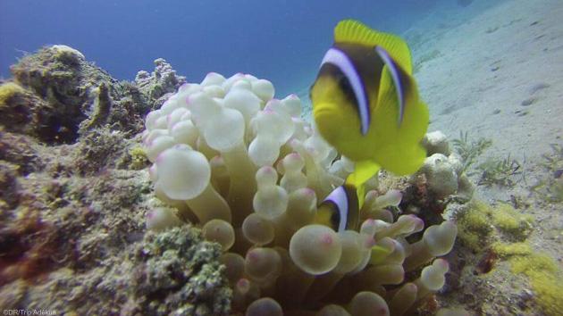 Séjour plongée en mer Rouge et en Egypte