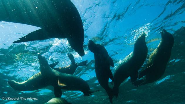 plonger avec les otaries et les baleines du golfe de californie