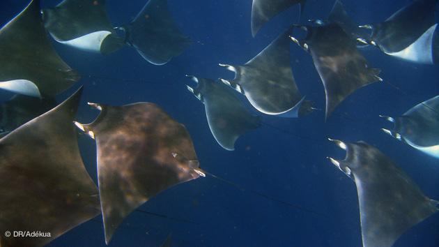 séjour plongée au Mexique