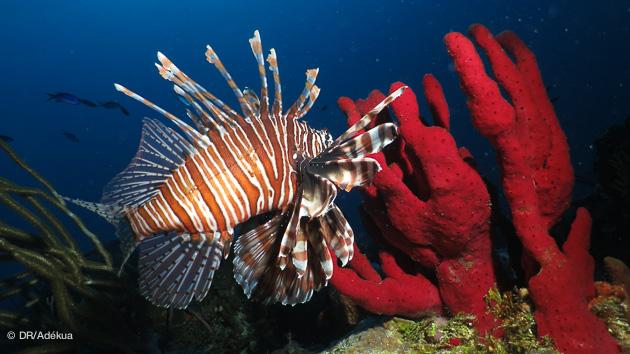 Séjour plongée à Playa del Carmen, entre faune colorée des Caraïbes et découverte des cénotes