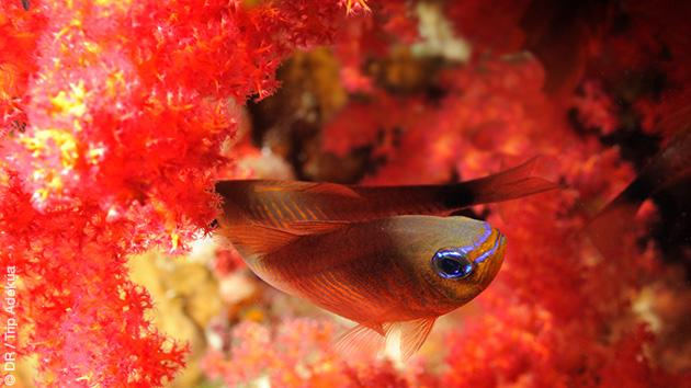 Un festival de couleurs dans les eaux de la Mer Rouge en plongée à Safaga