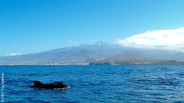 formation plongée à Tenerife aux Canaries