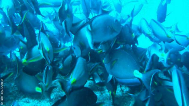 Séjour plongée sur l'île de Sal au Cap Vert
