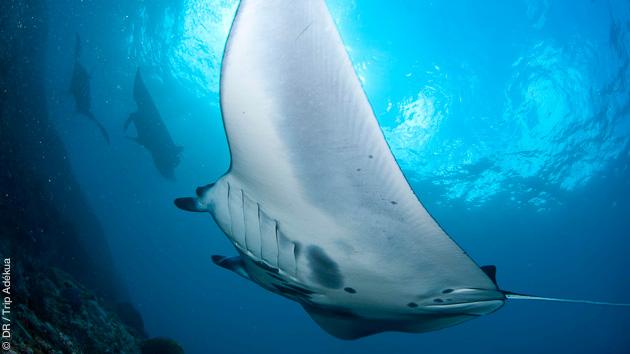Séjour plongée aux Maldives