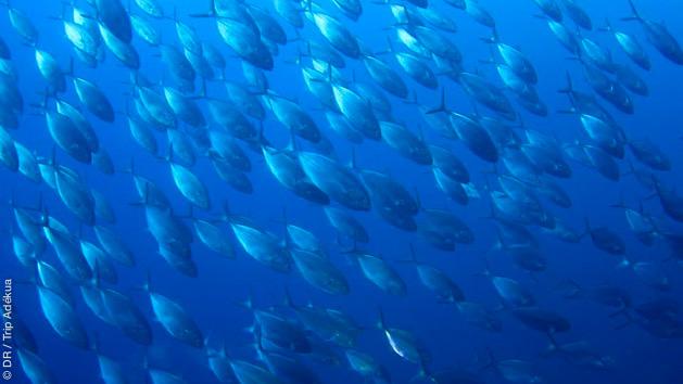 Séjours plongée à Malte en mer Méditerannée