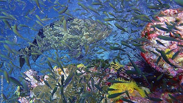 Séjour plongée en Thaïlande