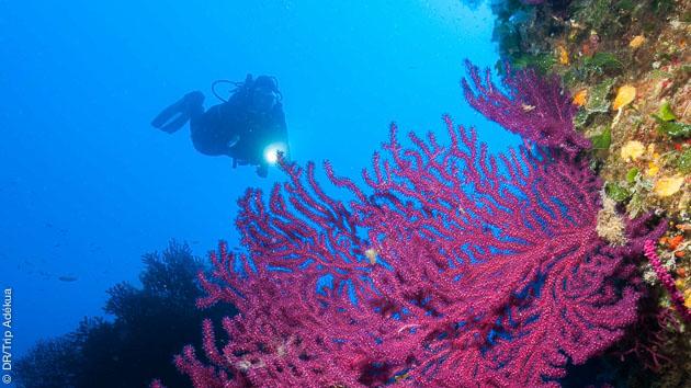 Plongées colorées pour observer les nudibranches, muck dive et macro avec Trip Adékua