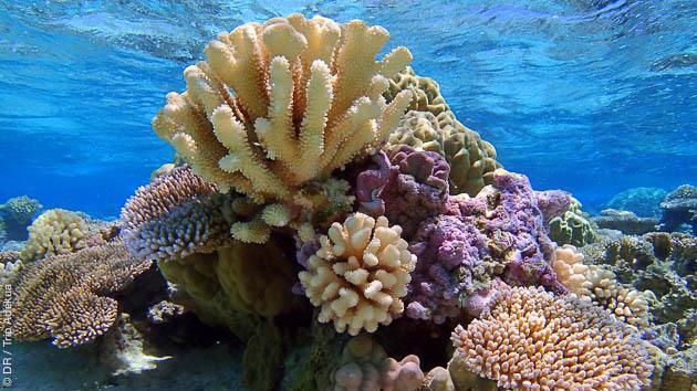 Séjour plongée snorkeling à Tahiti en Polynésie française