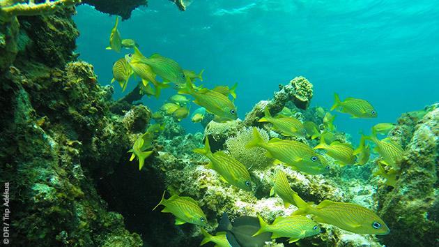 Superbes plongées à découvrir lors de ce séjour à Cat Island, aux Bahamas
