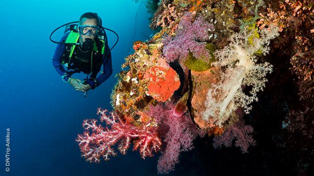 sejours de plongee aux Philipines