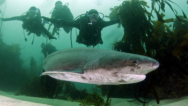 safari plongée en Afrique du sud avec les requins