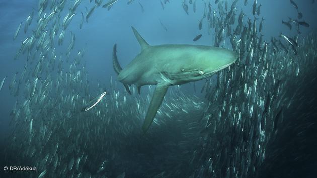 séjour plongée en Afrique du Sud pour le Sardine Run