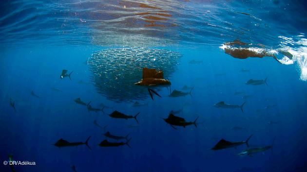 très belles plongées au Mexique pendant les vacances