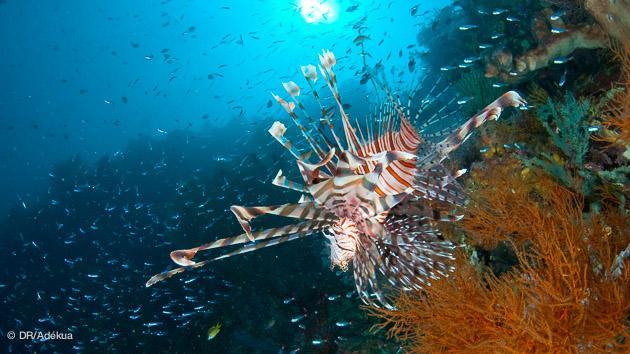 Croisières plongées dans l'Océan Indien avec Trip Adékua