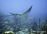 Les sites de la Mer des Caraïbes pour vous seul ? C'est possible, à Puerto Lindo - voyages adékua