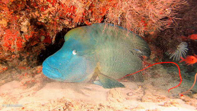faune sous-marine exceptionnelle aux Maldives