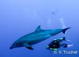 Jours 6 à 9 :  Tikehau, plus proche encore du paradis de la plongée - voyages adékua