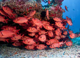 Jours 9 à 13 : Des plongées extraordinaires dans les passes de Rangiroa - voyages adékua