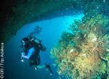 Plonger en Asie: des couleurs, du petit et du gros - voyages adékua