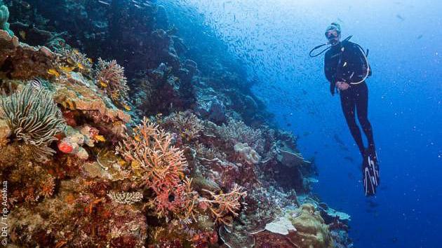 Des sites de plongées incroyables à découvrir lors de votre séjour à Milne Bay en Papouasie Nouvelle Guinée
