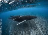 Découvrez les deux plus beaux spots de plongée sous-marine du Pacifique - voyages adékua