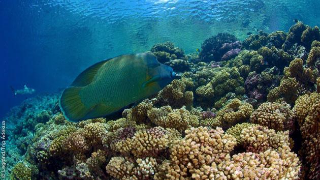 La faune sous-marine de Rangiroa et Fakarava vous réserve son plus bel accueil lors de vos plongées !