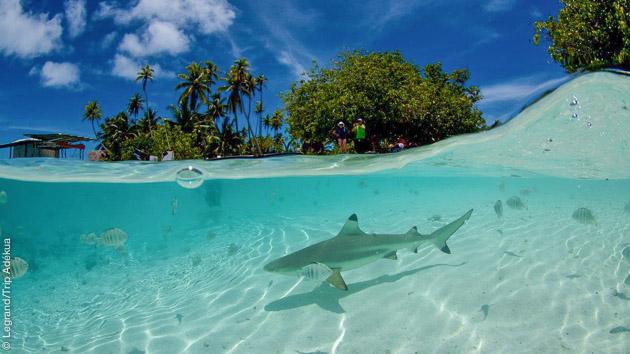 Bleu turquoise ou bleu profond : les eaux de Polynésie Française regorgent de trésors de plongée et de rencontres inoubliables