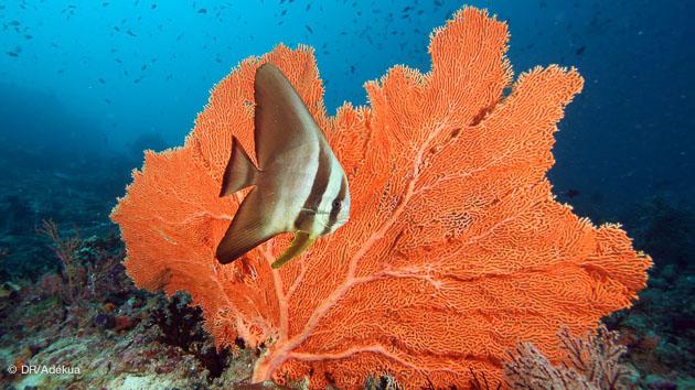 beau corail pendant votre plongée aux maldives lors de votre croisière
