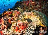 Palmez aux côtés des raies matas et des inoffensifs requins baleine - voyages adékua