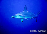 Un programme de plongée en mer Rouge exceptionnel - voyages adékua