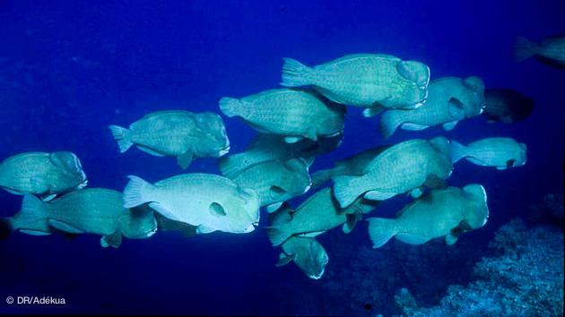 rencontres à sensation pour vos plongées en mer rouge au Soudan