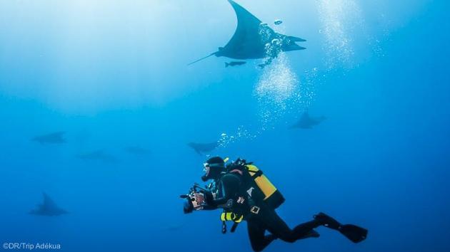 Vos vacances plongée de rêve aux Açores avec immersions et hébergement