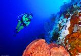 Plongée pure dans un Parc National très protégé  - voyages adékua