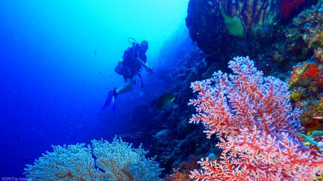 Explorez le récif de Tubbataha pendant des plongées inoubliables