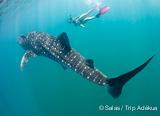 Exceptionnelle croisière plongée d'une semaine en mer de Cortez - voyages adékua